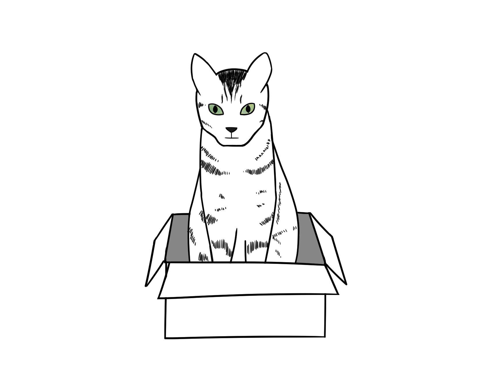 happy-cat-in-box